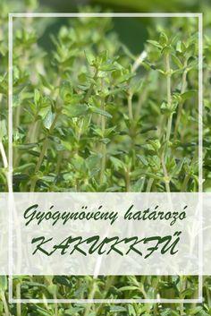 gyógynövények parazitaellenes gyűjteménye parazita férgekből