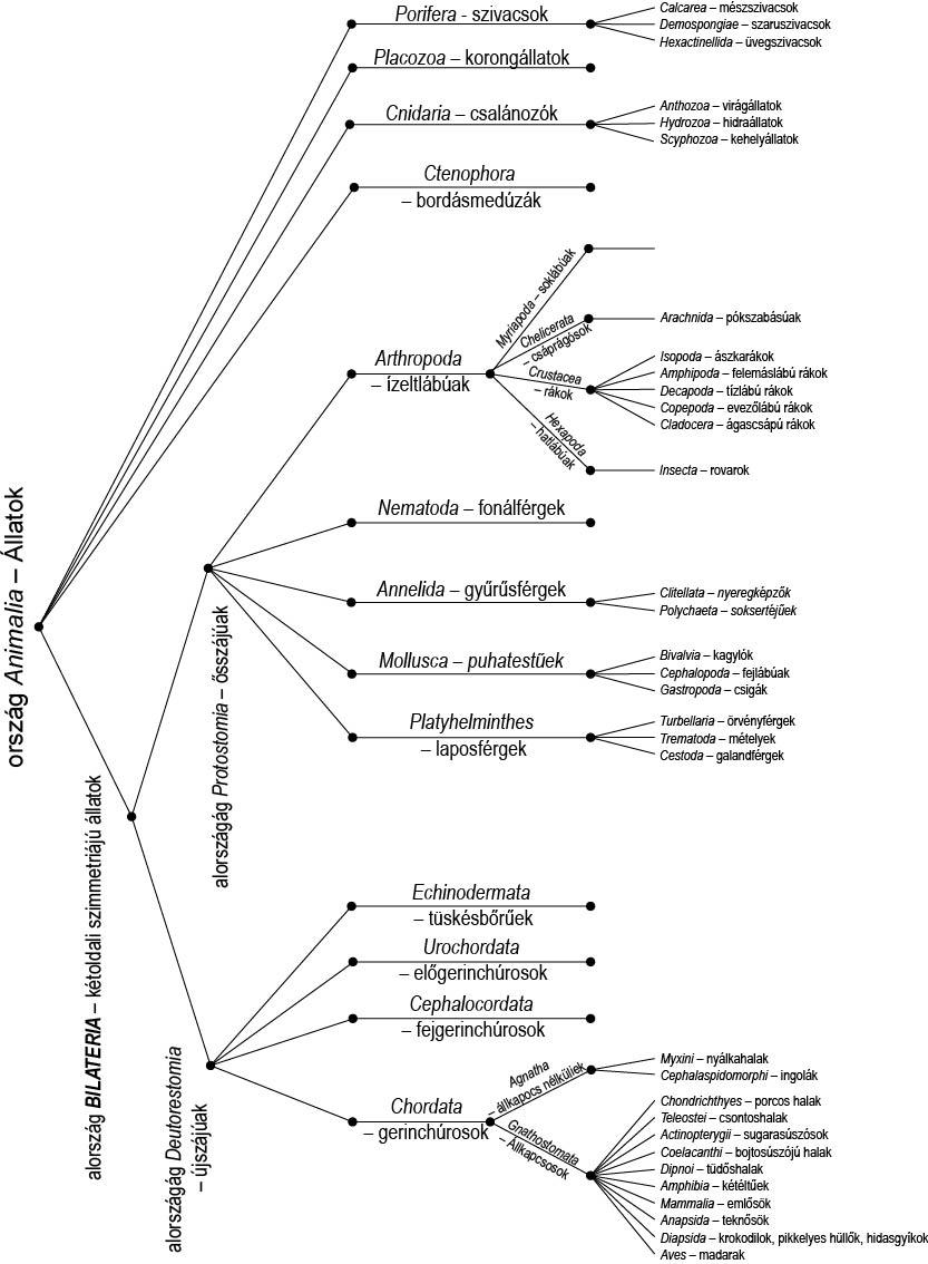 az epiparasites meghatározása