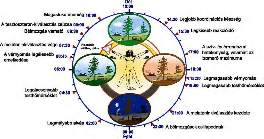 töltse ki a kerekes féreg fejlesztésének diagramját)